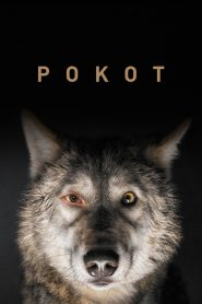 Pokot 2017 film online